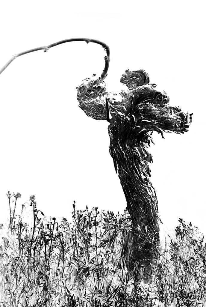 le peuples des vignes denis bergamili